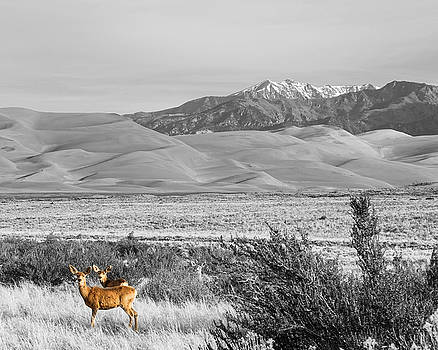 James BO Insogna - Great Colorado Sand Dunes Deer