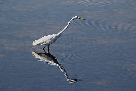 Great Egret by April Wietrecki Green
