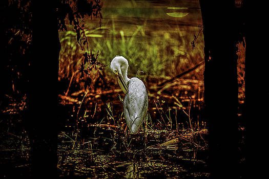 Great Egret Devouring by Michael Touchet
