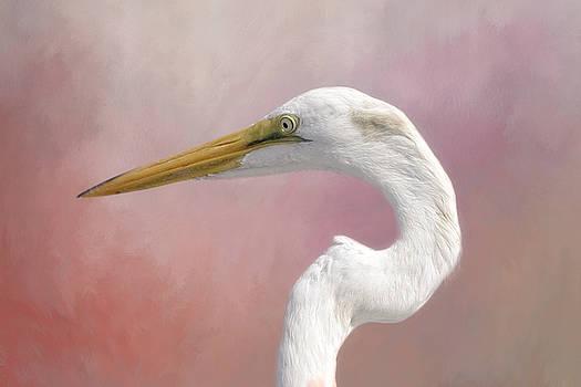 Kim Hojnacki - Great Egret Profile