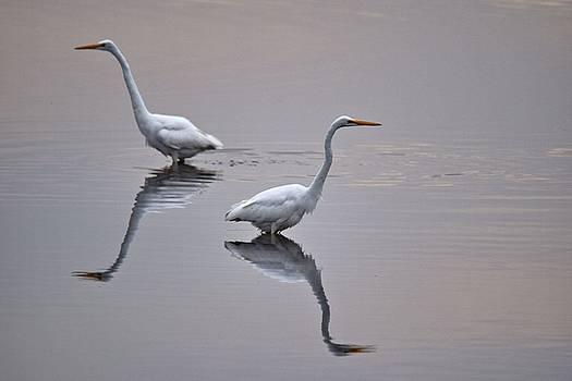 Great Egrets, Bombay Hook National Wildlife Refuge, Smyrna, Delaware, 2015 by Wayne Higgs