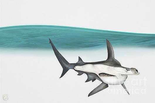 Great Hammerhead Sphyrna mokarran - Squat-headed Hammerhead Shark - Grand Requin-marteau - Cornuda by Urft Valley Art