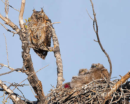 Great Horned Owl Family by Jim Fillpot