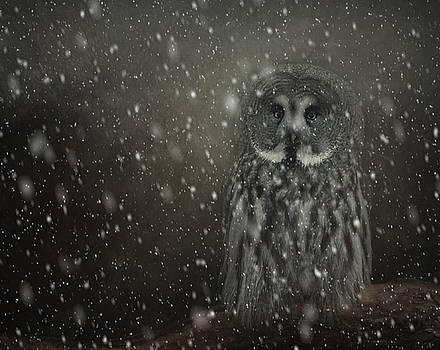 Great Owl in Snow by Sue Fulton