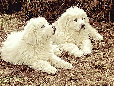Great Pyranese Puppies2 by Bonnie Willis