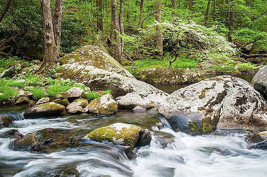 Great Smoky Mountains TN Tremont River Dogwood by Robert Stephens