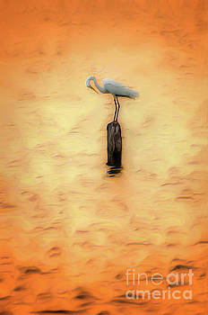 Dan Carmichael - Great White Heron on Currituck Sound Outer Banks AP