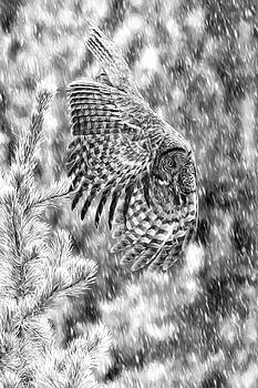 Great Grey Owl in Snowstorm D9544 by Wes and Dotty Weber