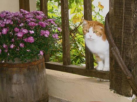 Yvonne Ayoub - Greece Cat in the Window
