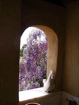 Yvonne Ayoub - Greece Wisteria through Arched Window