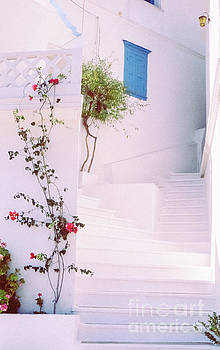 Greek stairway with roses by Silvia Ganora