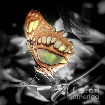 Green and bronze Butterfly by Rrrose Pix