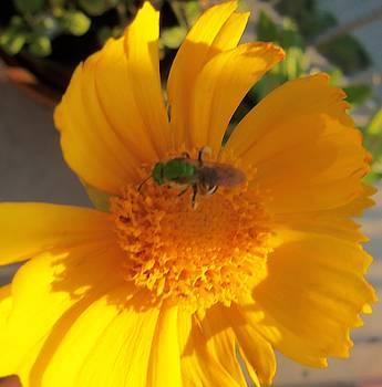 Green Bee-2 by Hatin Josee