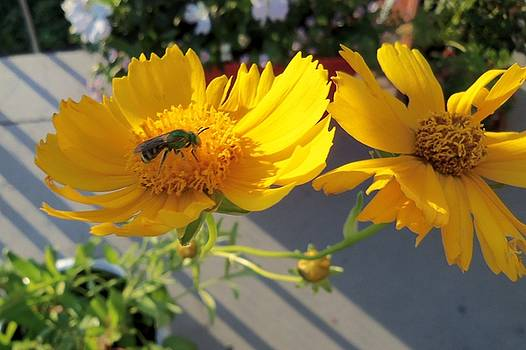 Green Bee-4 by Hatin Josee