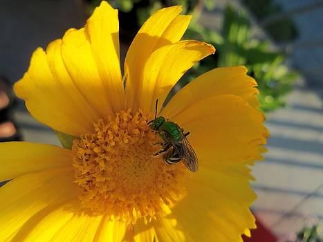 Green Bee-5 by Hatin Josee