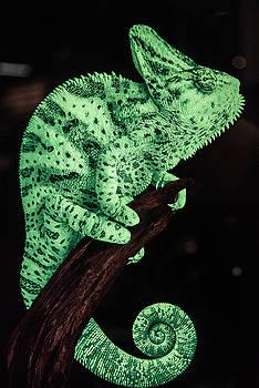 Green Chameleon by William Shevchuk