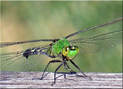 Green Dragonfly by Mikki Cucuzzo