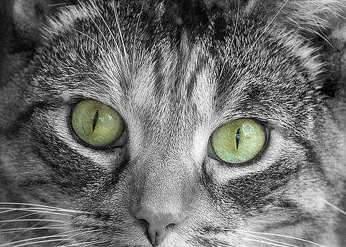 Green Eyes by Cathy Kovarik
