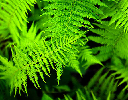 Green ferns by Alex Land