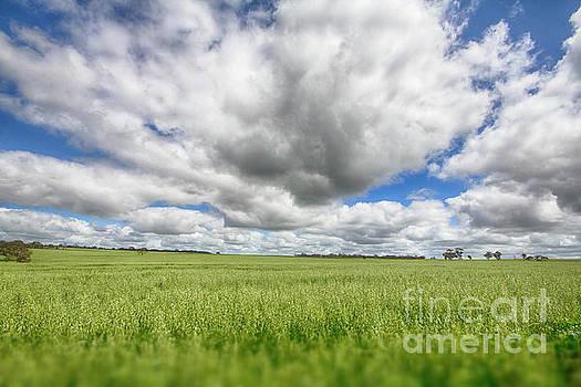 Green Fields 2 by Douglas Barnard
