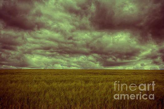 Green Fields 3 by Douglas Barnard