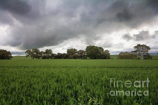 Green Fields 5 by Douglas Barnard