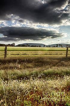 Green Fields 6 by Douglas Barnard
