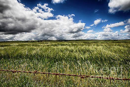 Green Fields by Douglas Barnard