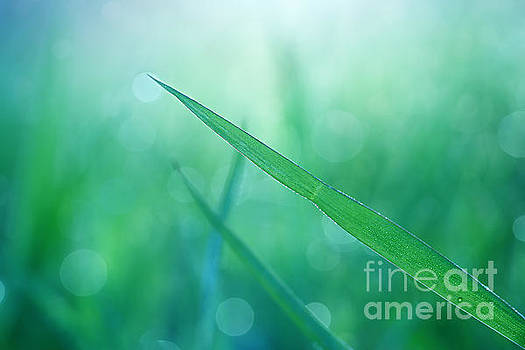 Green Grasses by LHJB Photography