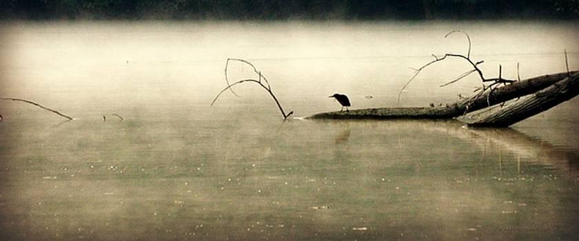 Green Heron in Dawn Mist by Kathy Barney