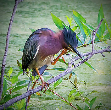 Green Heron Perched by Brian Wallace
