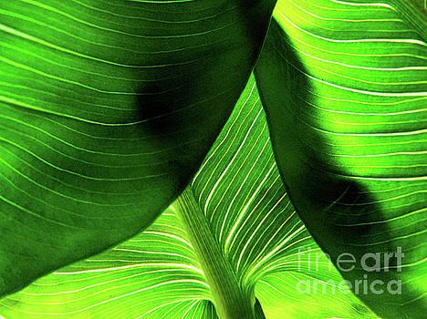 Green by Jasna Dragun