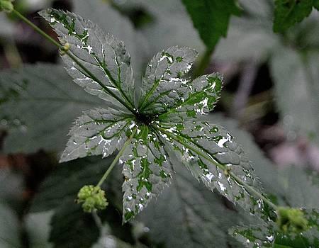 Green Leaf by Sue Houston