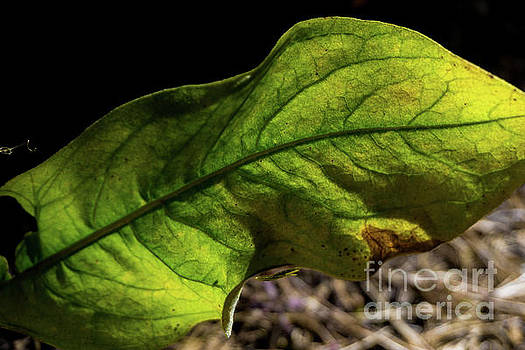 Green Leaf by Terry Lynn Johnson