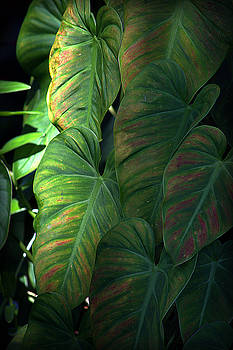 Green Leaves At Akaka Falls by Lori Seaman