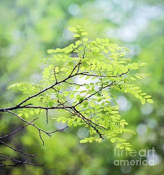 Green Leaves In The Forest by Kerri Farley