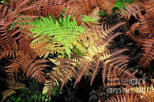 Charmian Vistaunet - Green on Red