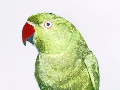 Green Parrot by Sajjad Musavi