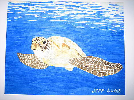 Green Sea Turtle by Jeff Lucas