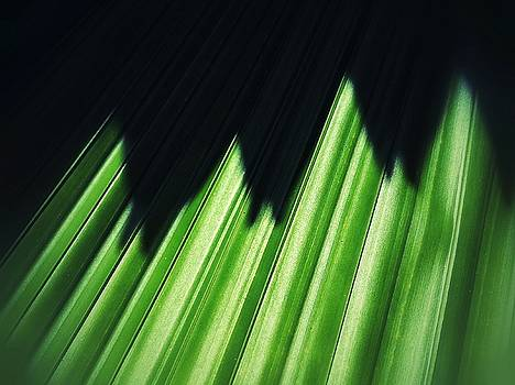 Green shadows by Olivier Calas