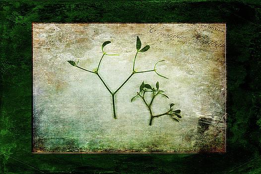 Green Tradition by Randi Grace Nilsberg