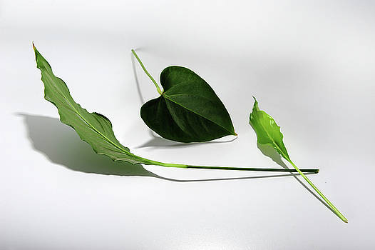 Green Trio by Randi Grace Nilsberg