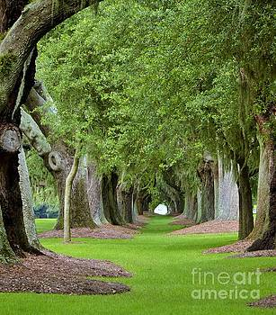 Green Tunnel by Adelmo Leite de Sa