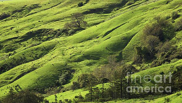 Greener Pastures by Matt Tilghman