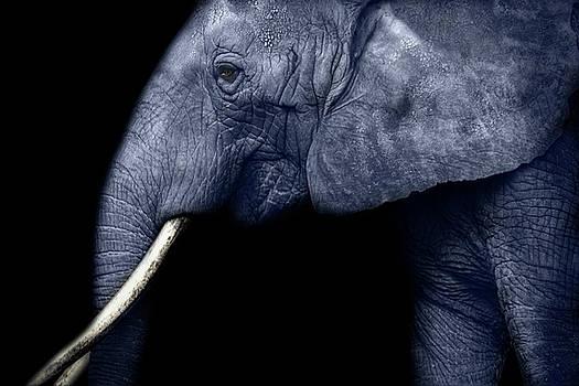 Grey Elephant by Claudia Moeckel
