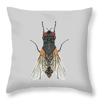 Grey Fly Pillow by R  Allen Swezey