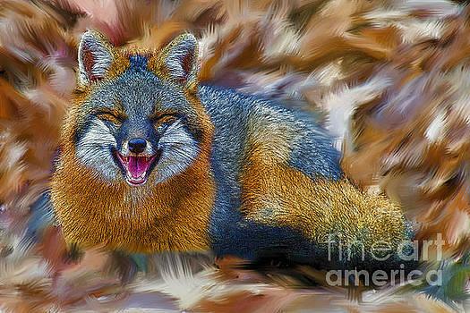 Dan Friend - Grey fox smiling artistic