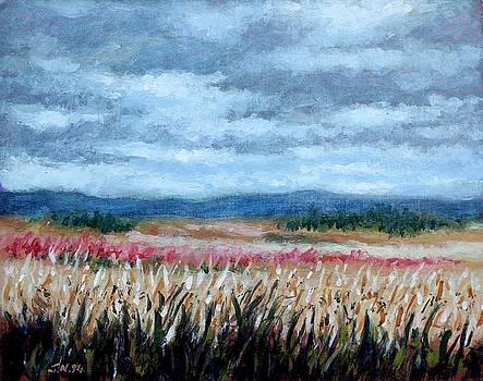 Grey Sky by John  Nolan