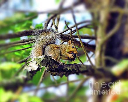 Grey Squirrel Gathering Food by Kerri Farley