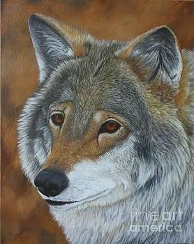 Grey Wolf Portrait by Sid Ball